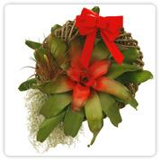 Bromeliad Medium Wreath