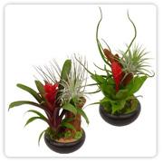 Bromeliad Small Dish Garden