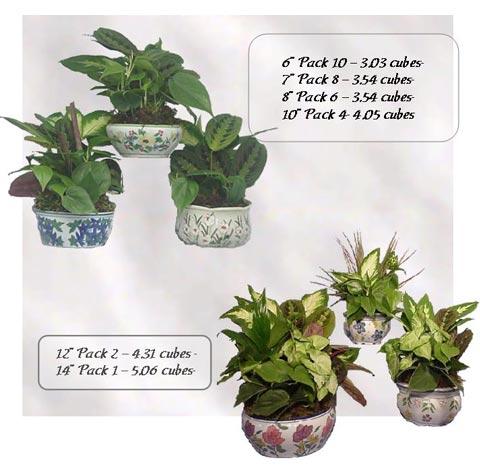 Dish Garden Ceramics