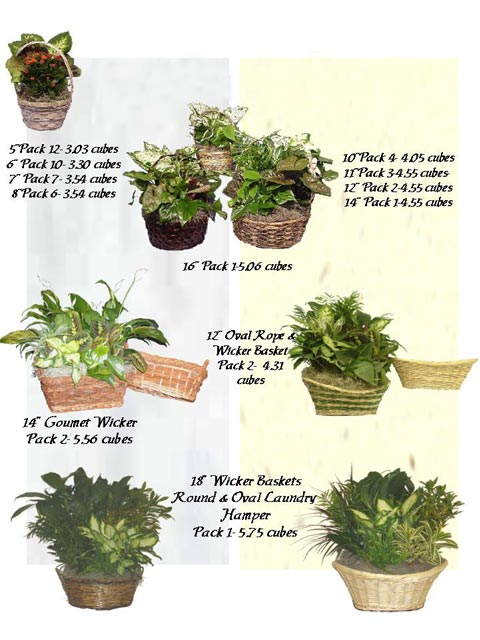 Dish Garden Wicker Baskets