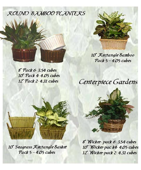 Dish Garden Wooden Containers