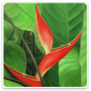 Heliconia Dwf Jamaica Blooms