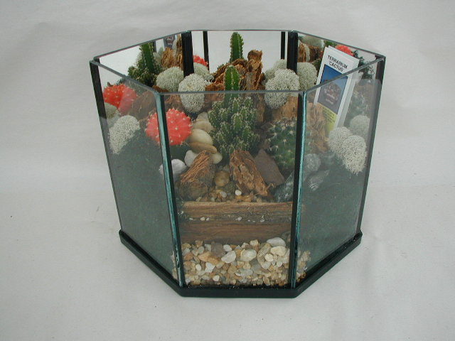 Terrarium Cactus 306