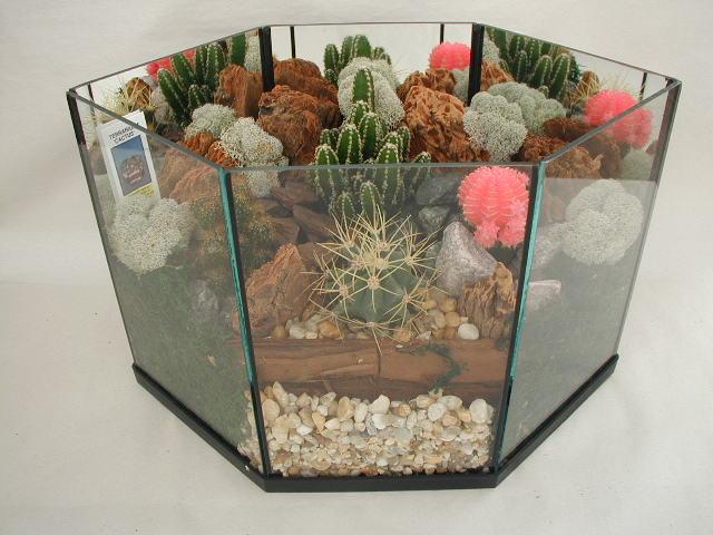 Terrarium Cactus 508