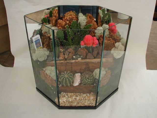 Terrarium Cactus 512