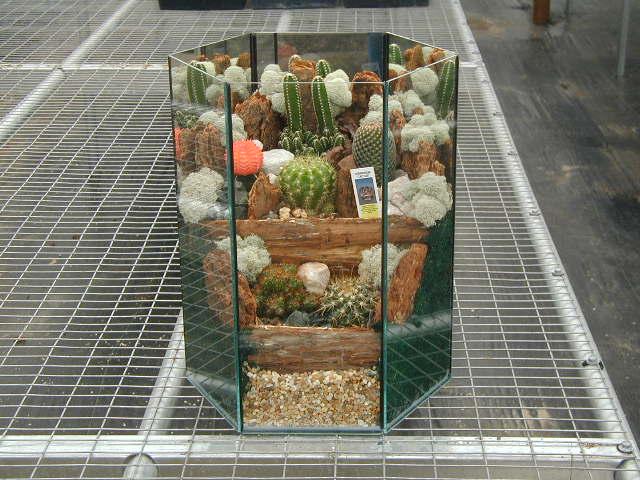 Terrarium Cactus 615